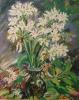 vangkumn flowers
